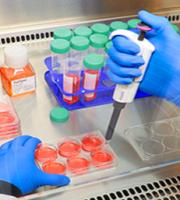 cultivo celular 2
